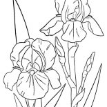 Hibiscus Flower, Orchid Flower Coloring Page: Orchid Flower Coloring Page