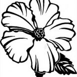Hibiscus Flower, Picture Of Hibiscus Flower Coloring Page: Picture of Hibiscus Flower Coloring Page
