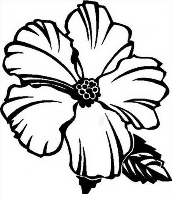 Hibiscus Flower, : Picture of Hibiscus Flower Coloring Page
