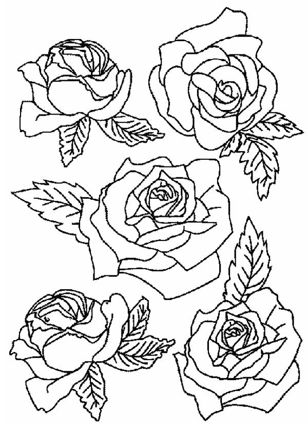 Flower Bouquet, : Picture of Roses for Flower Bouquet Coloring Page