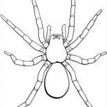 Spider, Picture Of Tarantula Coloring Page: Picture of Tarantula Coloring Page