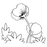 Hibiscus Flower, Poppy Flower Coloring Page: Poppy Flower Coloring Page