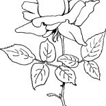 Flower Bouquet, Rose For Flower Bouquet Coloring Page: Rose for Flower Bouquet Coloring Page
