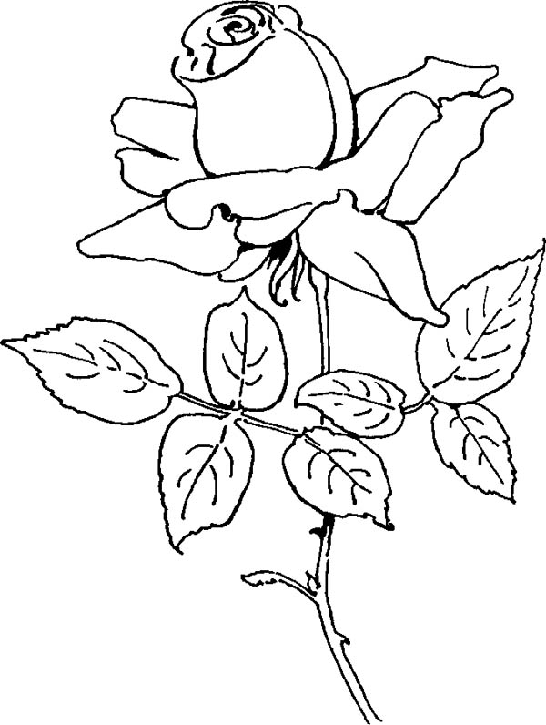 Flower Bouquet, : Rose for Flower Bouquet Coloring Page