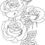 Flower Bouquet, Roses Flower Bouquet Coloring Page: Roses Flower Bouquet Coloring Page