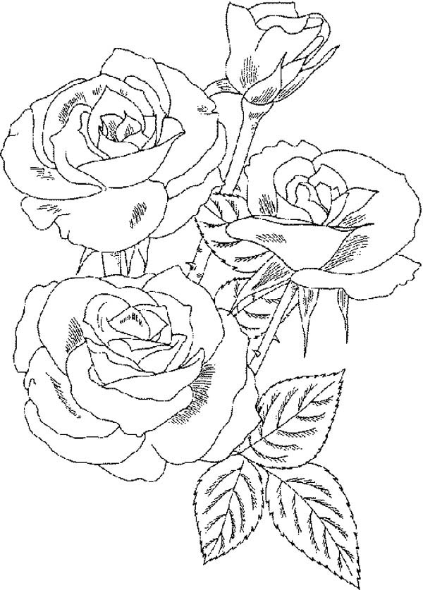 Roses Flower Bouquet Coloring Page Color Luna