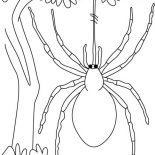 Spider, Spider Hang On Spider Web In The Jungle Coloring Page: Spider Hang on Spider Web in the Jungle Coloring Page