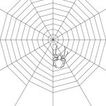 Spider, Spider Make Very Wide Spider Web Coloring Page: Spider Make Very Wide Spider Web Coloring Page