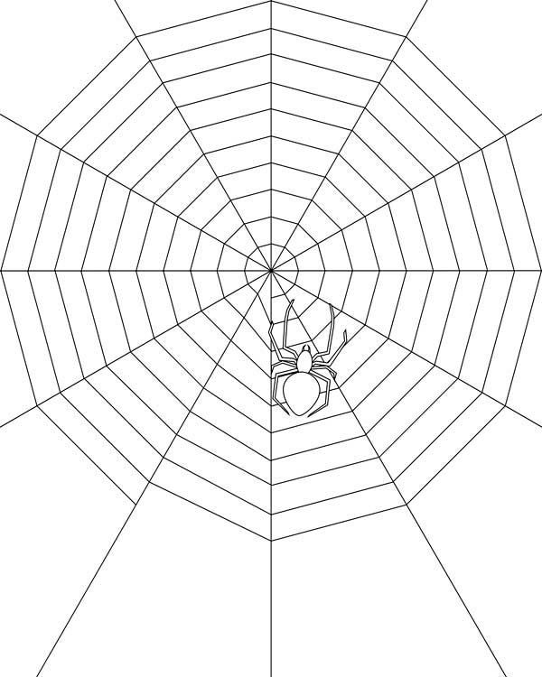 Spider, : Spider Make Very Wide Spider Web Coloring Page