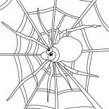 Spider, Spider Watch For Insect On Spider Web Coloring Page: Spider Watch for Insect on Spider Web Coloring Page