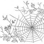 Spider, Spider Web Between Tree Branch Coloring Page: Spider Web Between Tree Branch Coloring Page