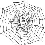 Spider, Spiders Can Spin Amazing Spider Web Coloring Page: Spiders Can Spin Amazing Spider Web Coloring Page