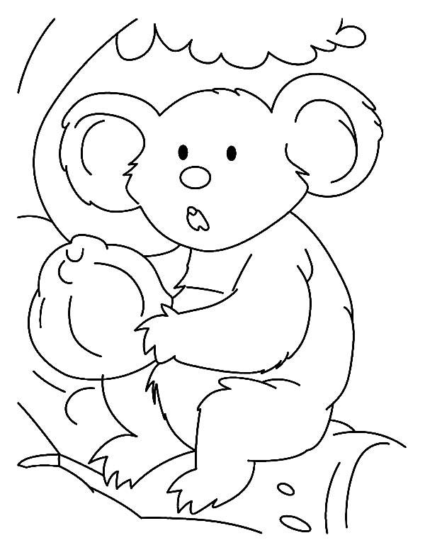 Koala Bear, : Stunning Koala Bear Coloring Page