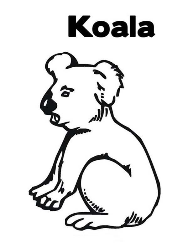 Koala Bear, : Thirsty Koala Bear Coloring Page