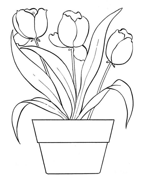 Tulips for Flower Bouquet Coloring