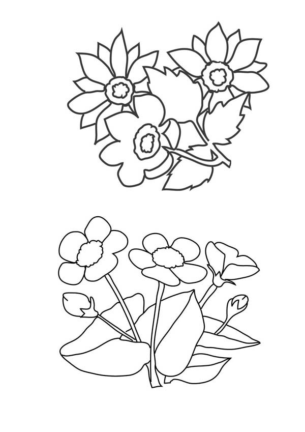 Flower Bouquet, : Various Flowers for Flower Bouquet Coloring Page