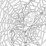 Spider, Very Large Spider Web Coloring Page: Very Large Spider Web Coloring Page