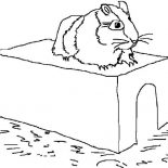 Guinea Pig, A Hamster On Its Limps In Guinea Pig Coloring Page: A Hamster on Its Limps in Guinea Pig Coloring Page