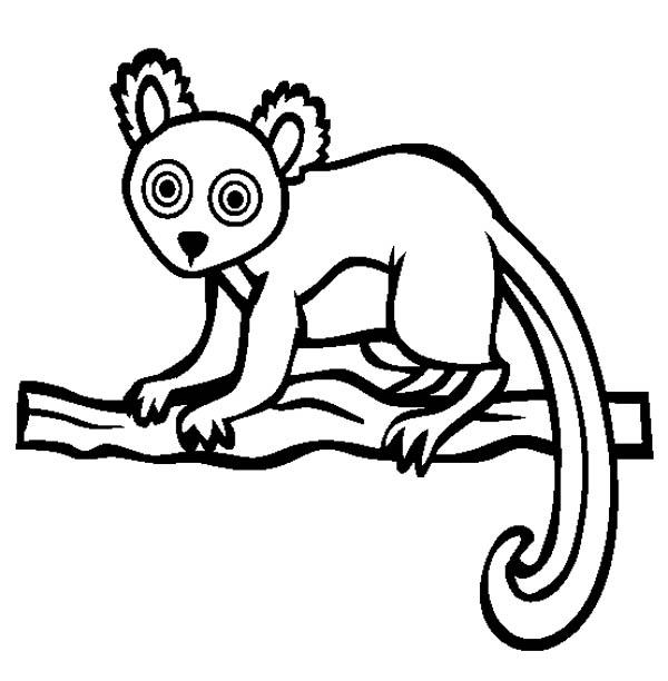 Lemur, : African Lemur Coloring Page