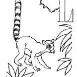 Lemur, Alphabet L Is For Lemur Coloring Page: Alphabet L is for Lemur Coloring Page