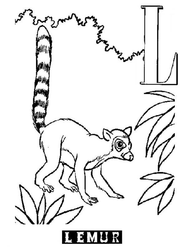 Lemur, : Alphabet L is for Lemur Coloring Page