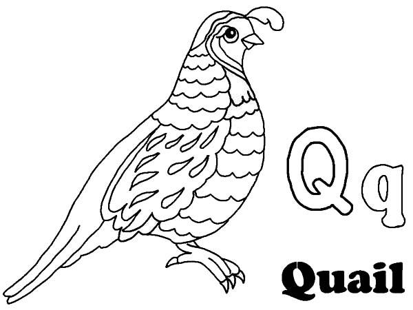 Quail, : Alphabet Q is for Quail Coloring Page