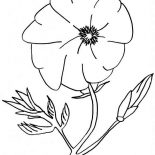 Poppy, Amazing Poppy Flower Coloring Page: Amazing Poppy Flower Coloring Page