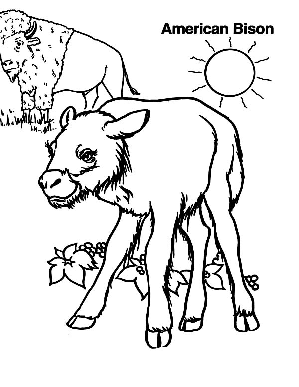 Bison, : American Bison Coloring Page