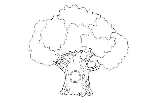 Oak Tree, : An Old Oak Tree Coloring Page