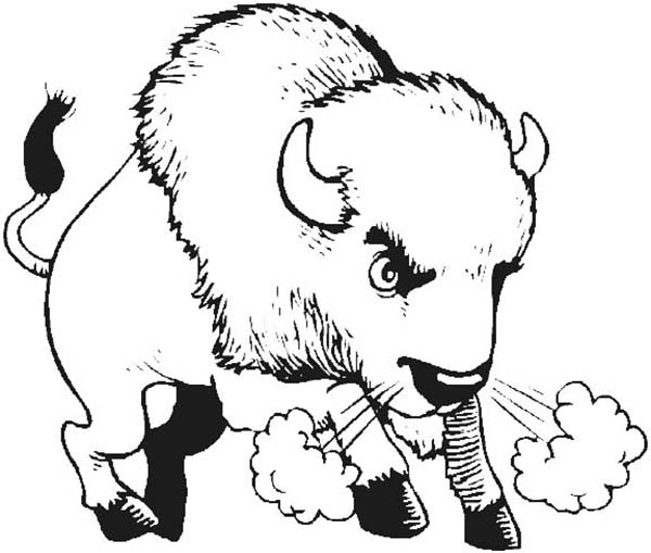 Bison, : Angry Bison Breath Coloring Page