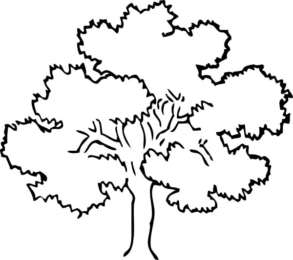 Oak Tree, : Awesome Drawing Oak Tree Coloring Page