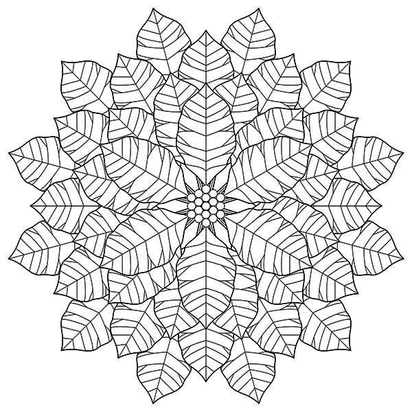 Poinsettia, : Awesome Drawing of Poinsettia Coloring Page