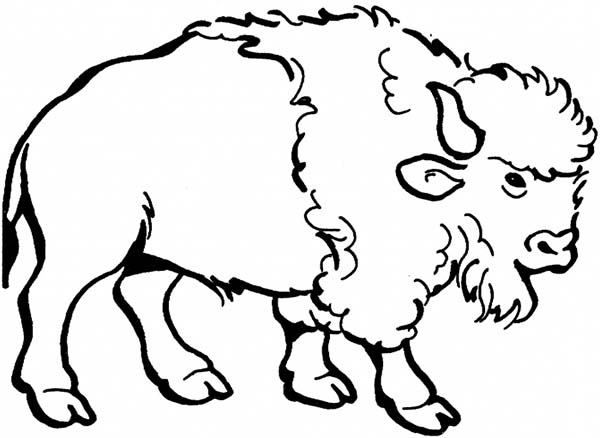 Bison, : Awesome Drawing of a Bison Coloring Page