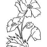 Poppy, Awesome Picture Of Poppy Coloring Page: Awesome Picture of Poppy Coloring Page