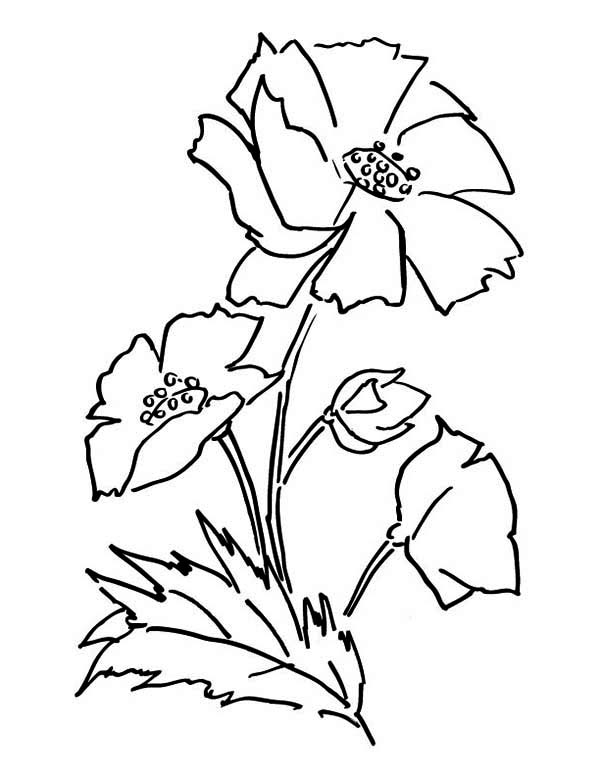 Poppy, : Awesome Picture of Poppy Coloring Page
