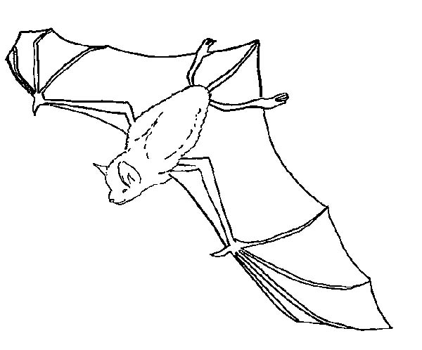 Bats, : Bats Flying Upside Down Coloring Page