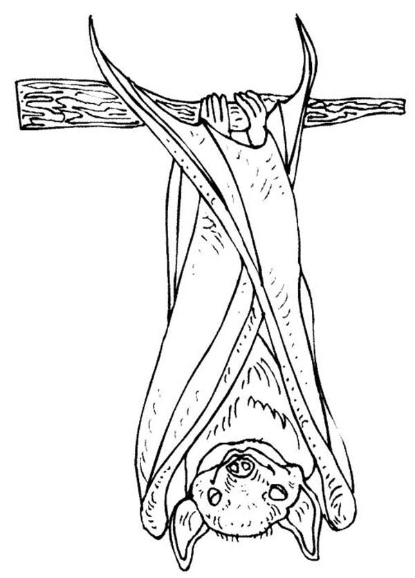 Bats, : Bats Hanging on Tree Branch Coloring Page