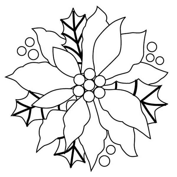 Poinsettia, : Beautiful Picture of Poinsettia Coloring Page