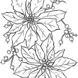 Poinsettia, Beautiful Poinsettia Flower Coloring Page: Beautiful Poinsettia Flower Coloring Page