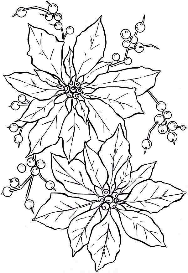 Poinsettia, : Beautiful Poinsettia Flower Coloring Page