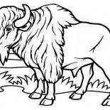 Bison, Bison Coloring Page: Bison Coloring Page