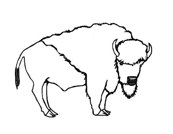 Bison, : Bison Image Coloring Page