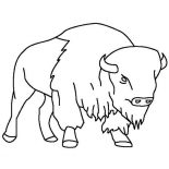 Bison, Bison Outline  Coloring Page: Bison Outline  Coloring Page