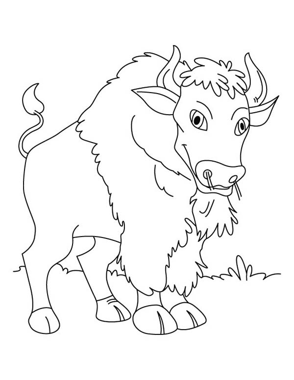 Bison, : Bison Standing Still Coloring Page