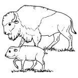 Bison, Bison Taking Care Of Her Baby Coloring Page: Bison Taking Care of Her Baby Coloring Page