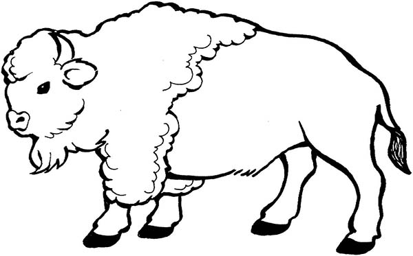 Bison, : Bison Walking Around Coloring Page