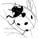 Lady Bug, Black Lady Bug Coloring Page: Black Lady Bug Coloring Page