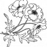 Poppy, Blooming Golden Poppy Coloring Page: Blooming Golden Poppy Coloring Page