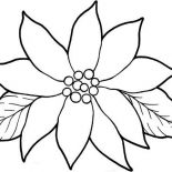 Poinsettia, Blooming Poinsettia Coloring Page: Blooming Poinsettia Coloring Page