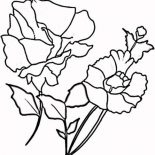 Poppy, Blooming Red Poppy Coloring Page: Blooming Red Poppy Coloring Page
